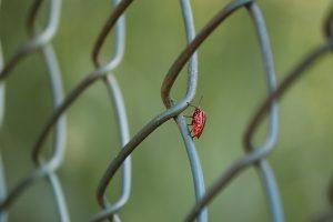 insecte sur une cloture de jardin