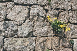 Mauvaise herbe poussant sur un mur