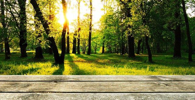 terrasse devant une forêt